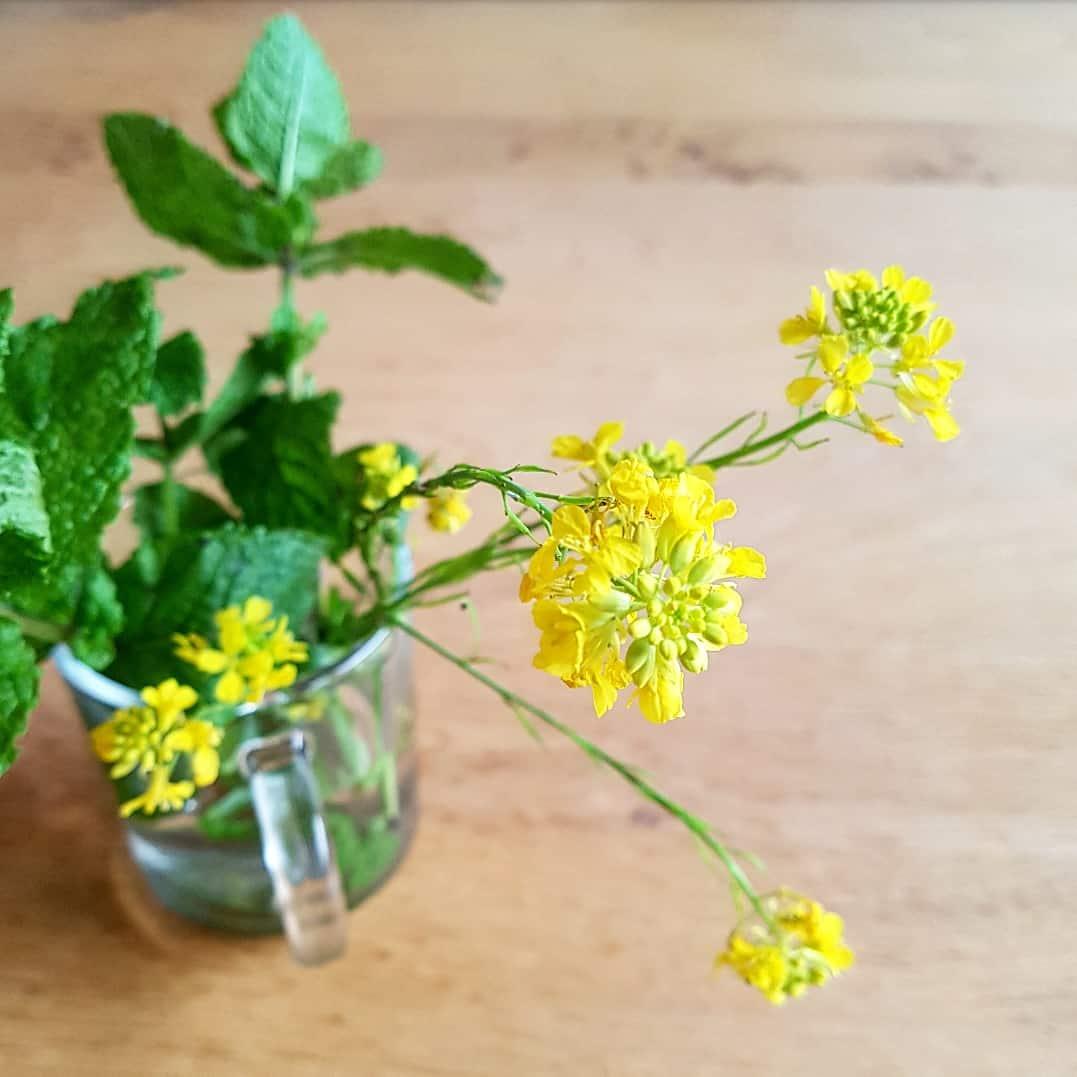 Mosterdzaad bloemen